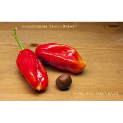 Ecuadorian Devil's Breath