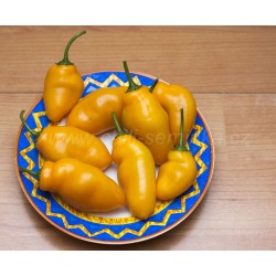 Rocoto Turbo Pube Orange