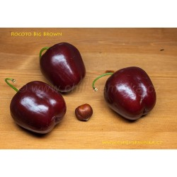 Rocoto Big Brown - semena