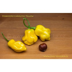 Habanero Carolina Yellow - semena