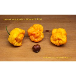 Jamaican Scotch Bonnet TFM - sazenice